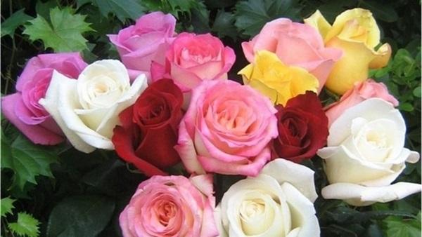 تفسير حلم الورد في المنام جريدتي نت