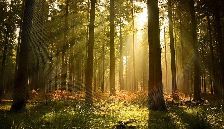 رواندا: خصخصة 80% من الغابات بحلول 2024
