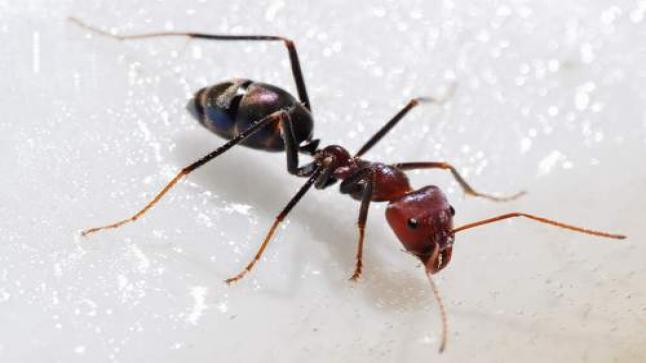 تفسير حلم النمل في المنام لابن سيرين والنابلسي