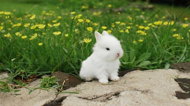 تفسير حلم الأرانب في المنام