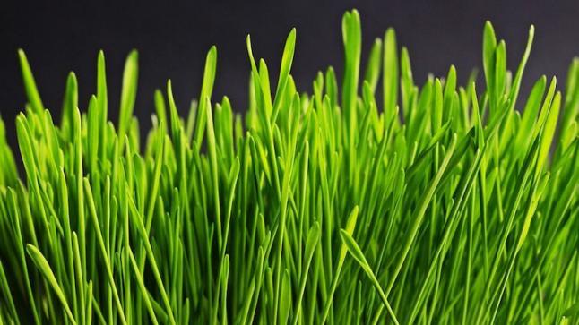 تفسير حلم العشب في المنام